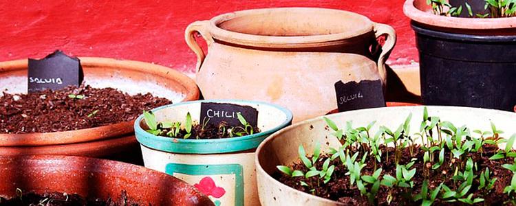 Huerto urbano. Taller Plantas aromáticas y medicinales